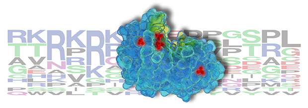 Antibodies for PTMScan