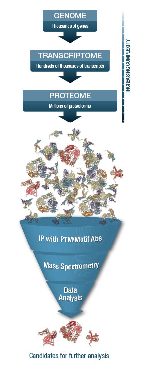 Simplfying Proteomics Funnel