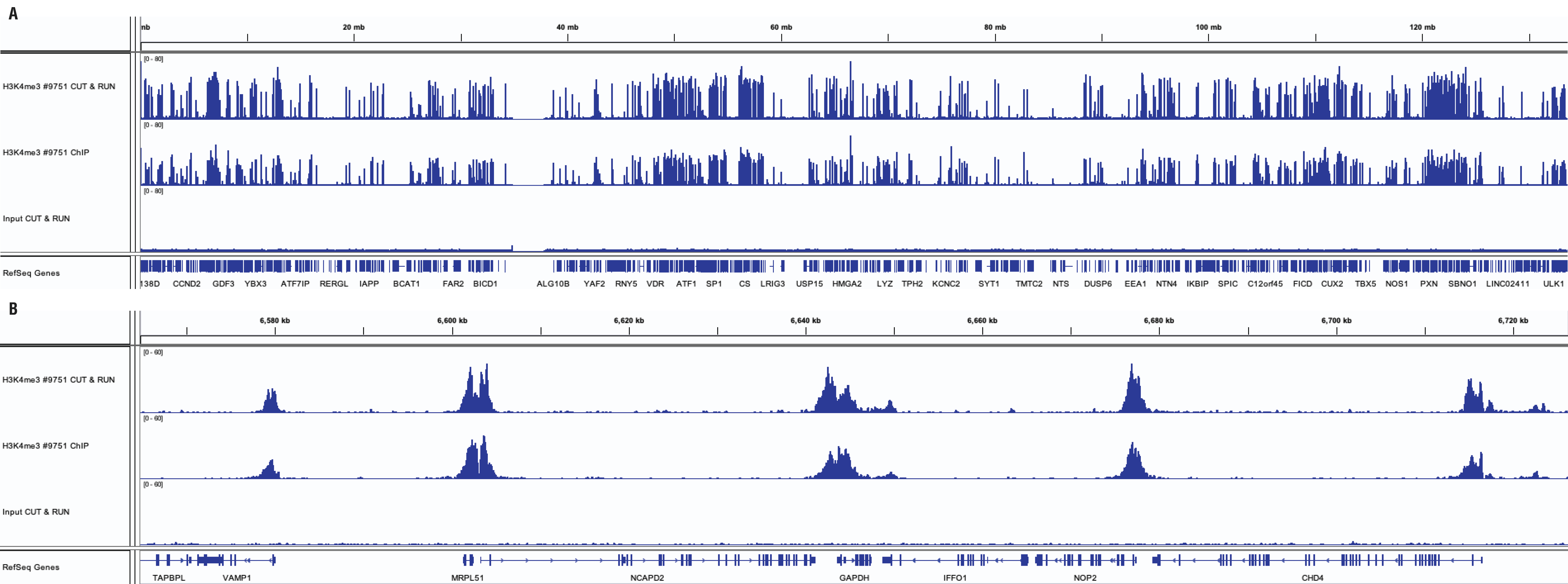 H3K4me3 sequencing results for CUT&RUN and ChIP