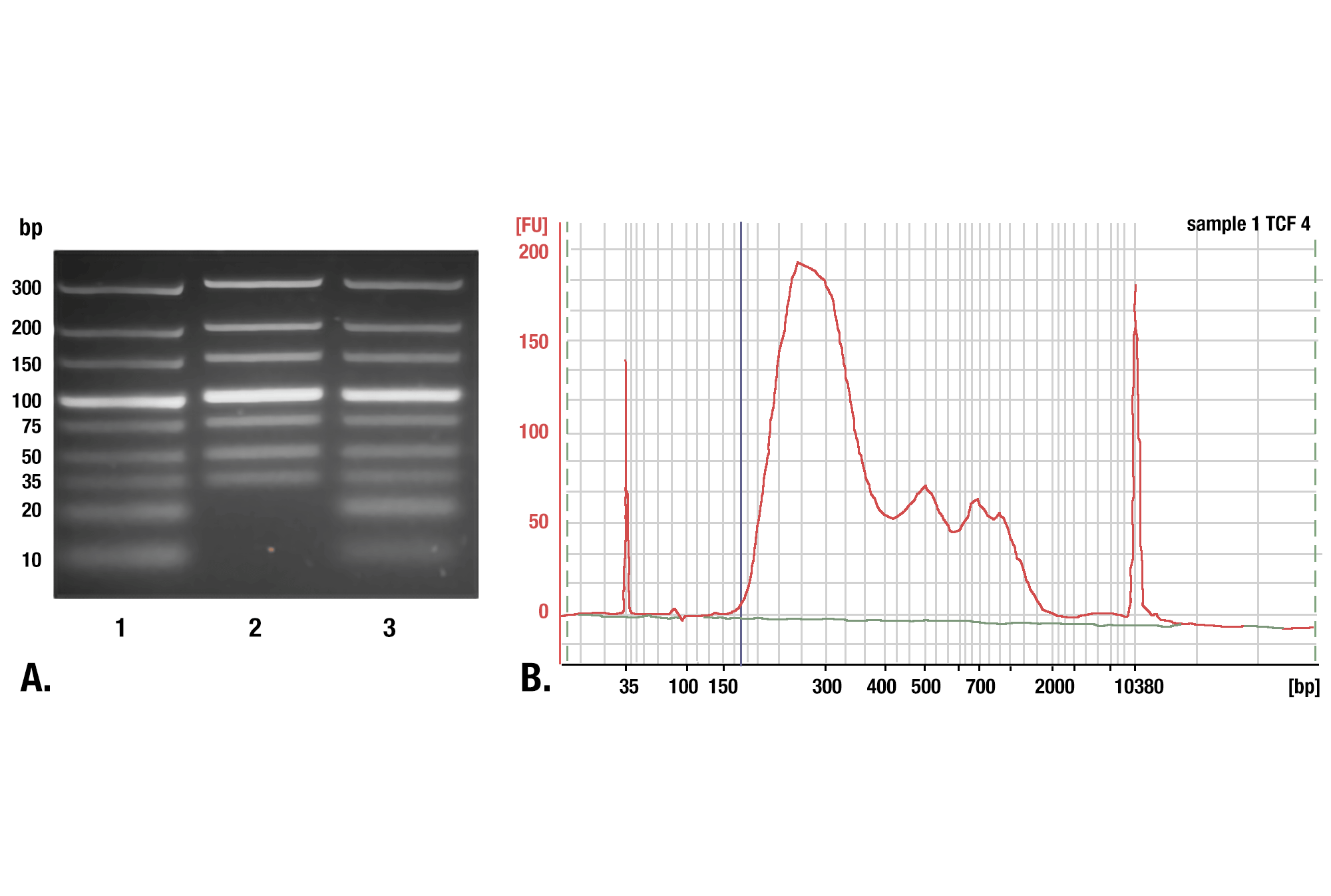 Phenol/Chloroform Extraction vs. Spin Columns for DNA Purification