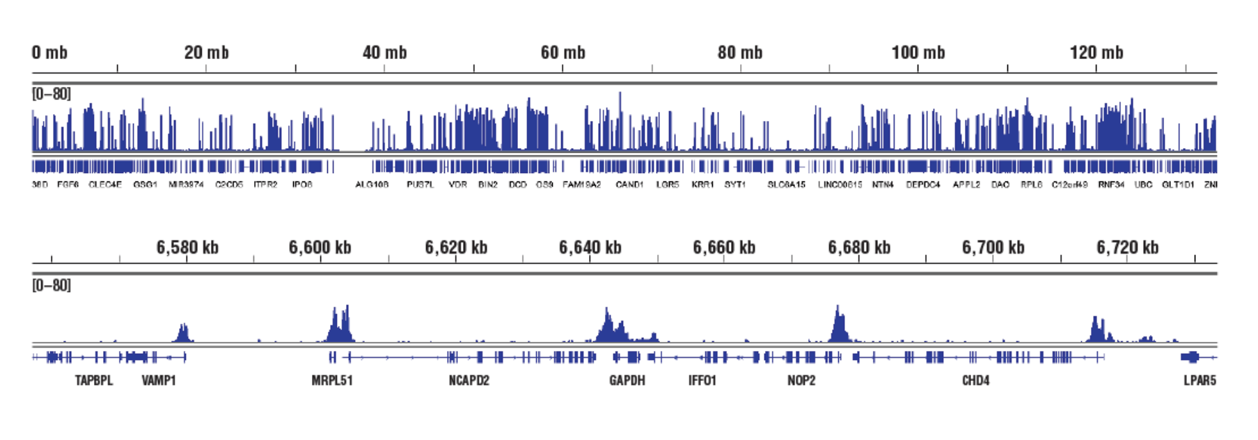 Accessible Chromatin, Target: H3K4me3