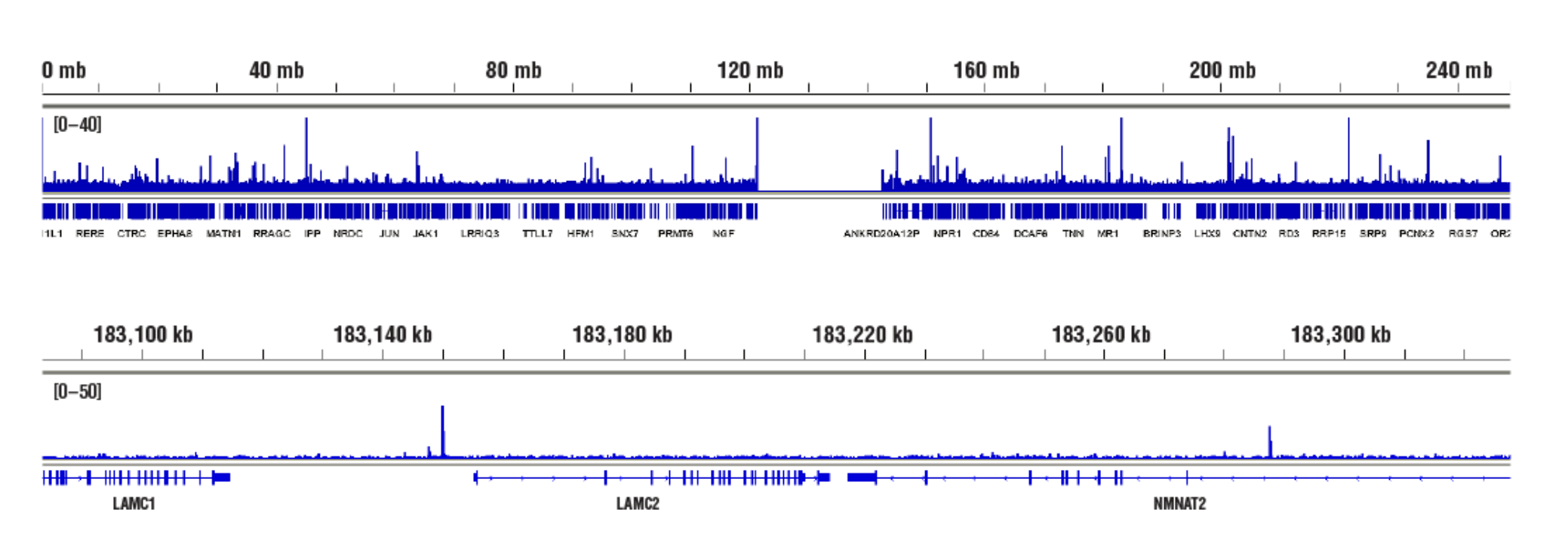 Accessible Chromatin, NF-κB p65