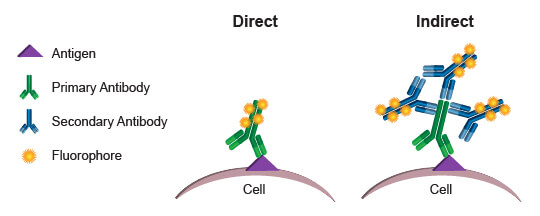Comparison of direct and indirect conjugation methods for staining for flow cytometry