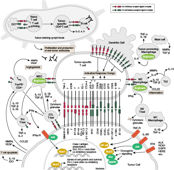 Immune Checkpoint Signaling