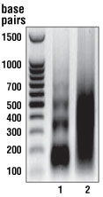 SimpleChIP Enzymatic Chromatin IP Kit (Magnetic Beads) #9003