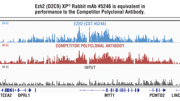 Side-by-side comparison of Ezh2 (D2C9) XP® Rabbit mAb #5246 and Competitor Polyclonal Antibody.