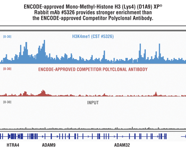 Side-by-side comparison of Mono-Methyl-Histone H3 (Lys4) (D1A9) XP® Rabbit mAb #5326 and Competitor Polyclonal Antibody.