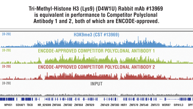 Side-by-side comparison of Tri-Methyl-Histone H3 (Lys9) (D4W1U) Rabbit mAb #13969 and Competitor Polyclonal Antibody.