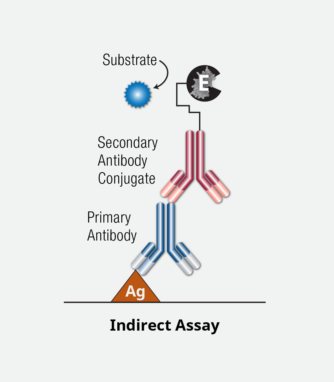 ELISA Indirect Assay