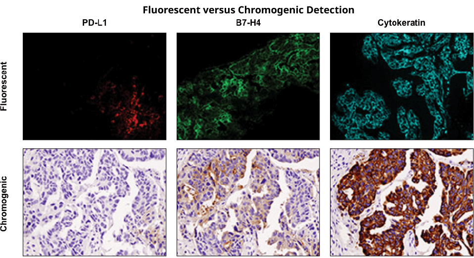 Fluorescent versus Chromogenic Detection