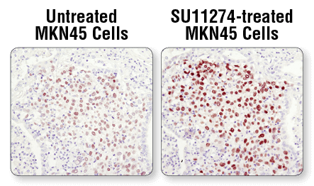 IHC MKN45 Cell Pellets.png