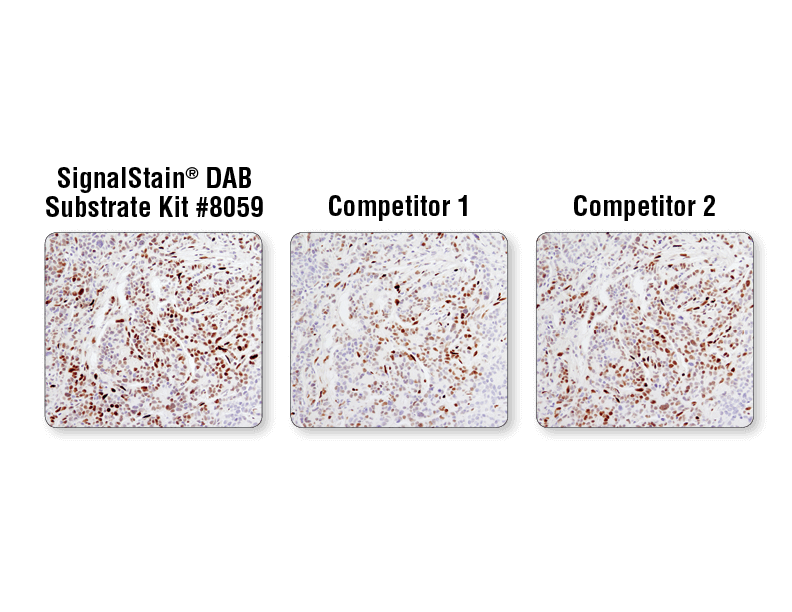 IHC DAB Substrate Performance