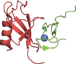 Ubiquitin Binding: NZF Domain