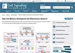 Developmental Biology Signaling & Stem Cell Resources
