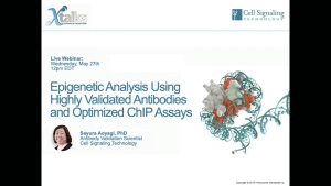 Epigenetics Analysis using Highly Validated Antibodies and Optimized ChIP Assayse