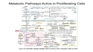 Targeting Cancer Pathways: Tumor Metabolism and Proliferation