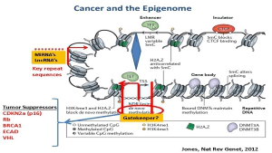 Targeting Cancer Pathways: The Epigenetics Question