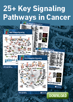 Download Cancer Signaling Pathway Posters