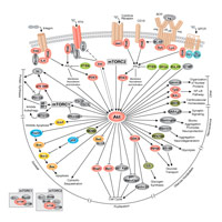 Featured Signaling Pathway