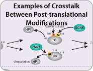 Examples of Crosstalk Between Post-translational Modifications