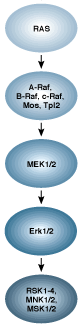 G-Protein-Coupled Receptors Signaling to MAPK/Erk