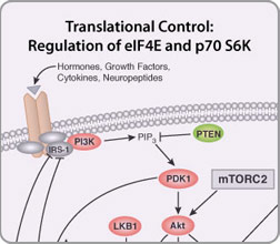 Regulation of eIF4